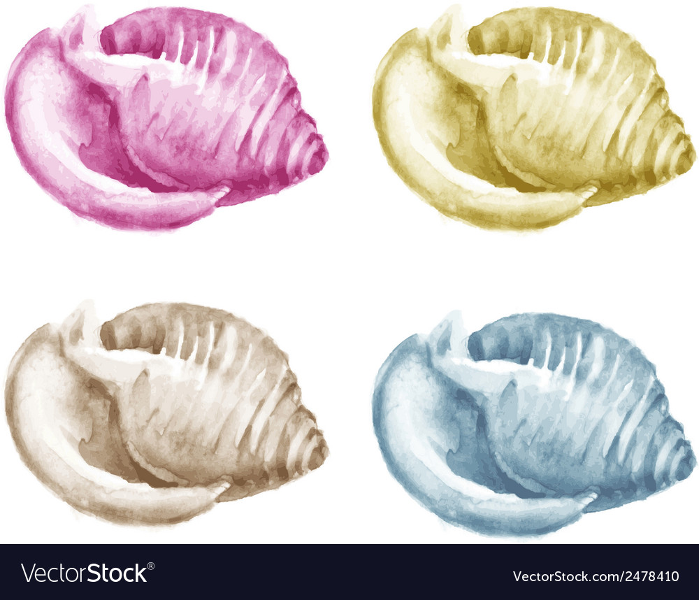 Set of watercolor shells for your design vector | Price: 1 Credit (USD $1)