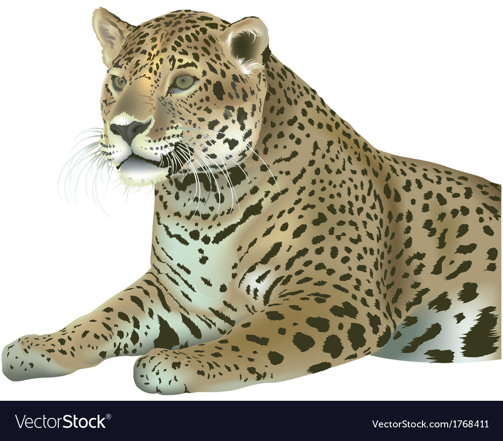 Laying leopard vector | Price: 3 Credit (USD $3)