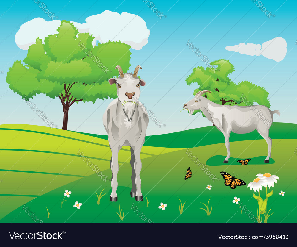 Goat and green lawn3 vector | Price: 3 Credit (USD $3)