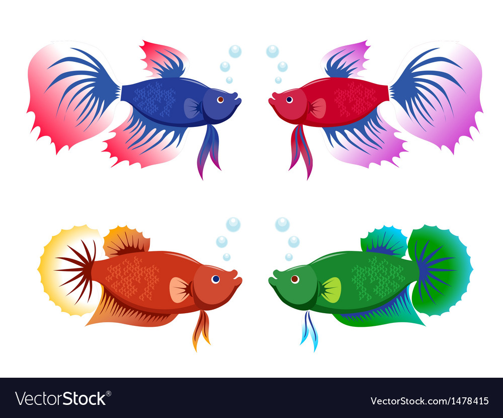 Siamese fighting fishes set vector | Price: 1 Credit (USD $1)