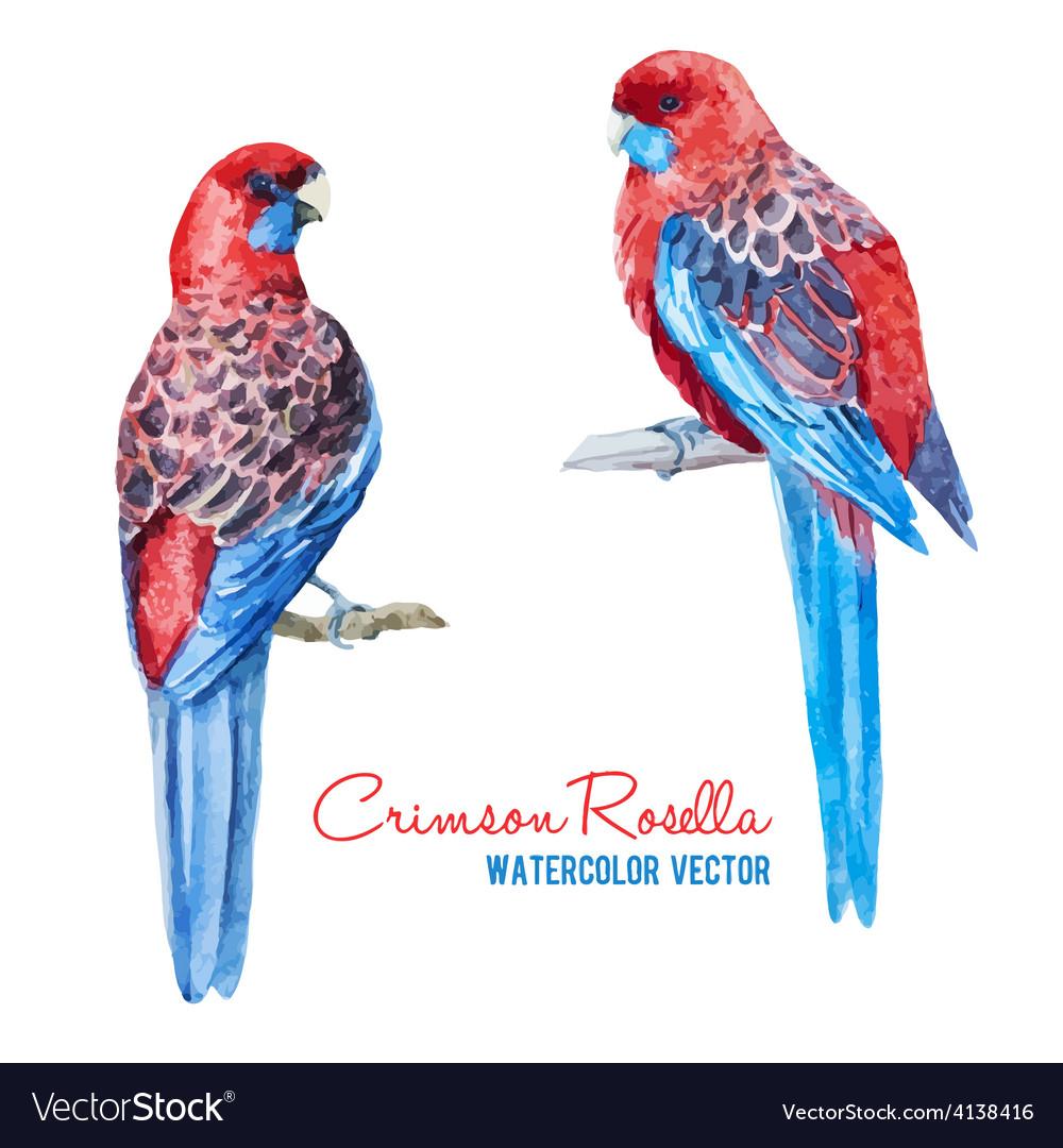 Tropical birds vector | Price: 1 Credit (USD $1)