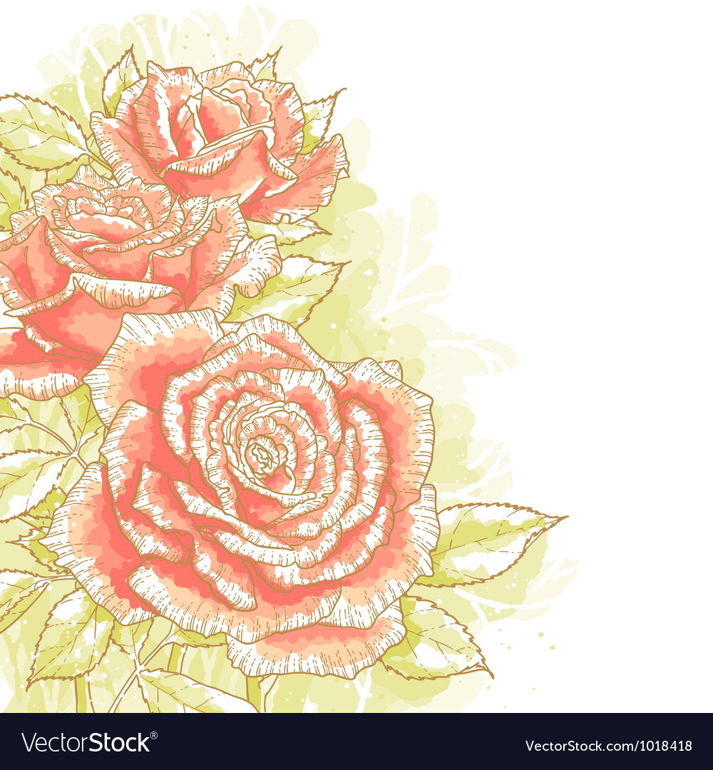 Pink roses on white background vector | Price: 1 Credit (USD $1)