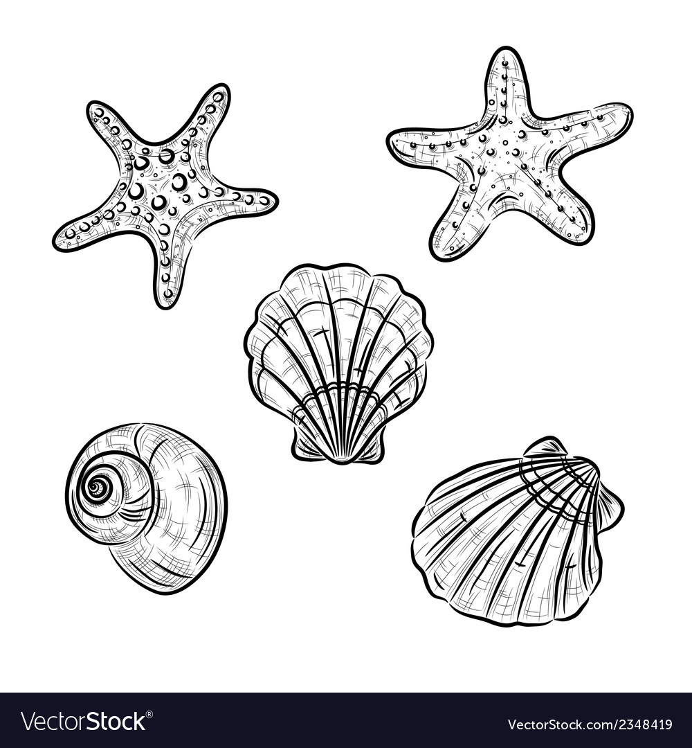 Aquatic fauna drawing vector | Price: 1 Credit (USD $1)