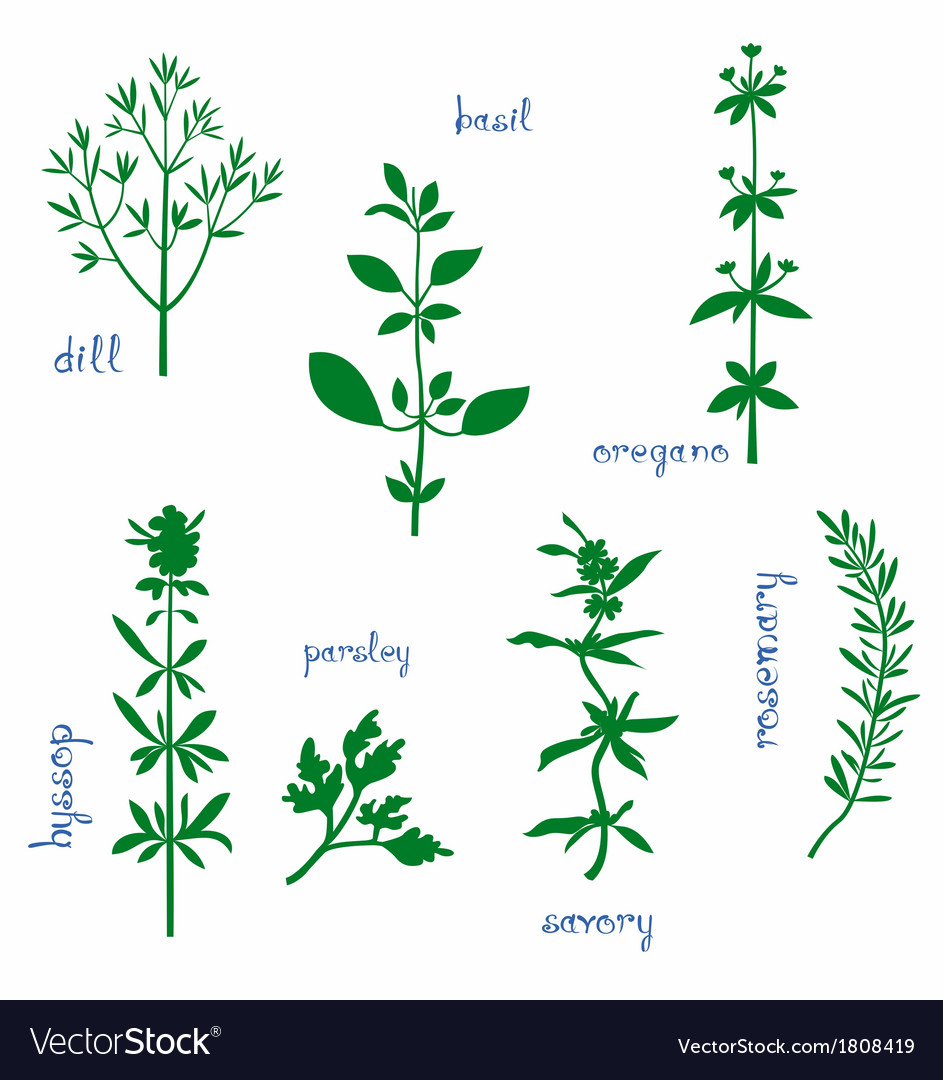 Aromatic herbs vector | Price: 1 Credit (USD $1)