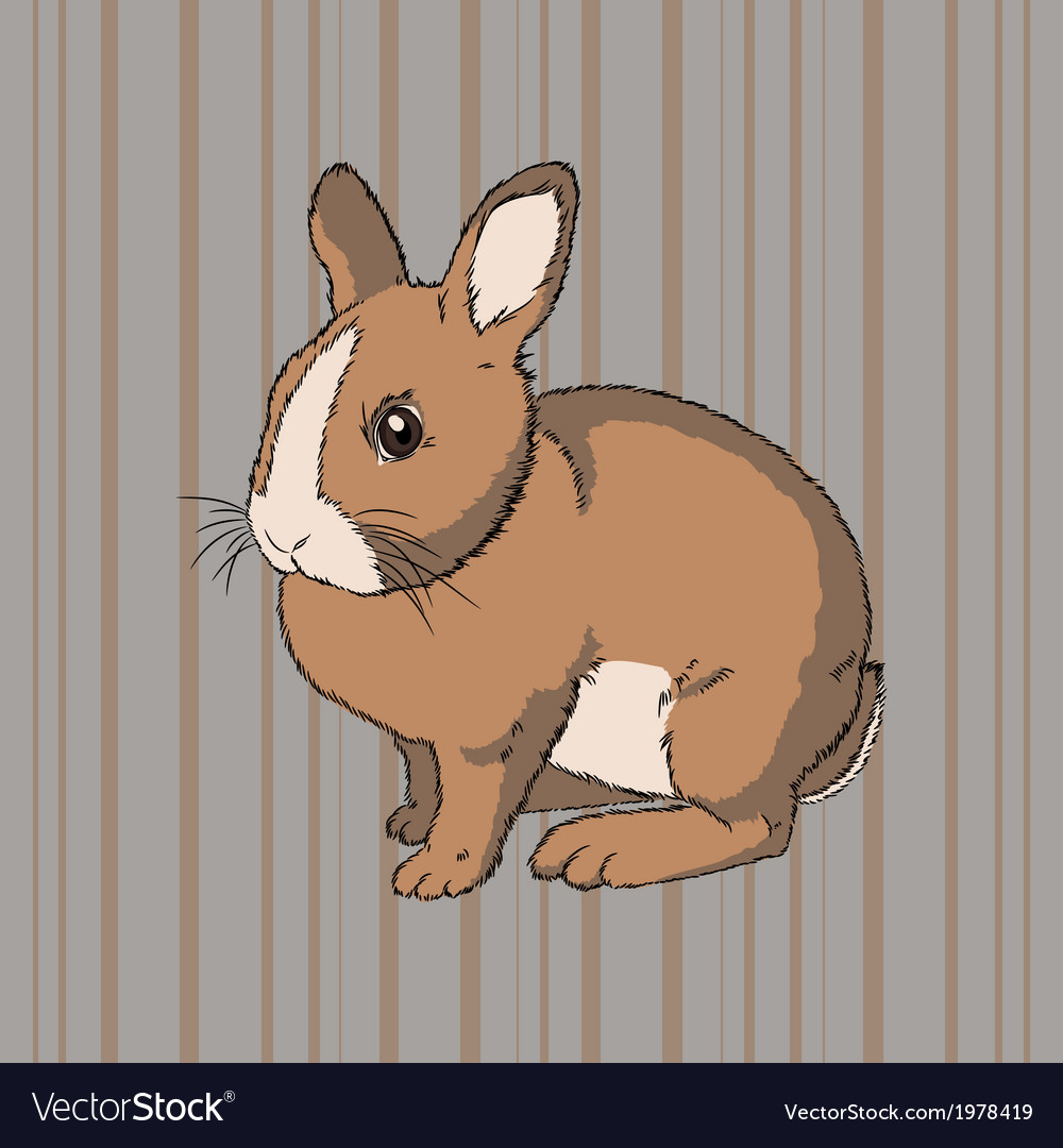 Fluffy brown sitting rabbit vector | Price: 1 Credit (USD $1)