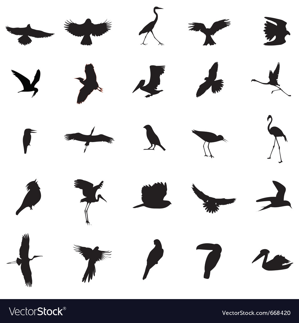 Different kind of bird vector