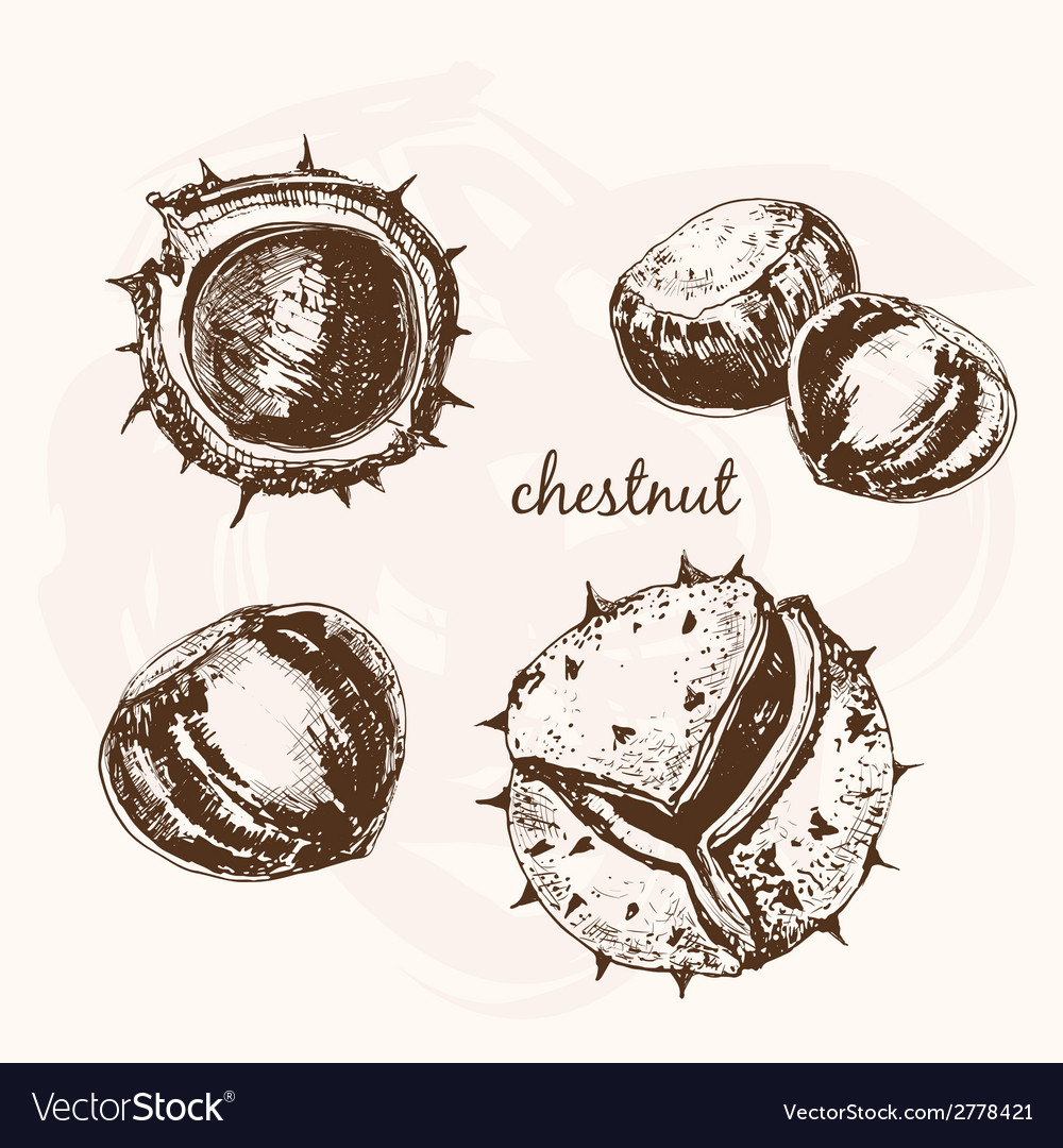 Chestnuts vector | Price: 1 Credit (USD $1)