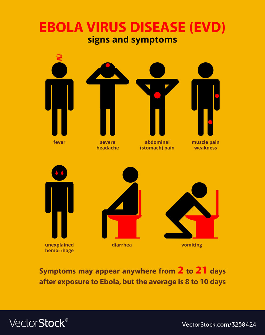 Ebola symptoms infographic vector | Price: 1 Credit (USD $1)