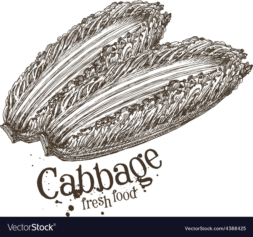 Ripe cabbage logo design template fresh vector | Price: 3 Credit (USD $3)