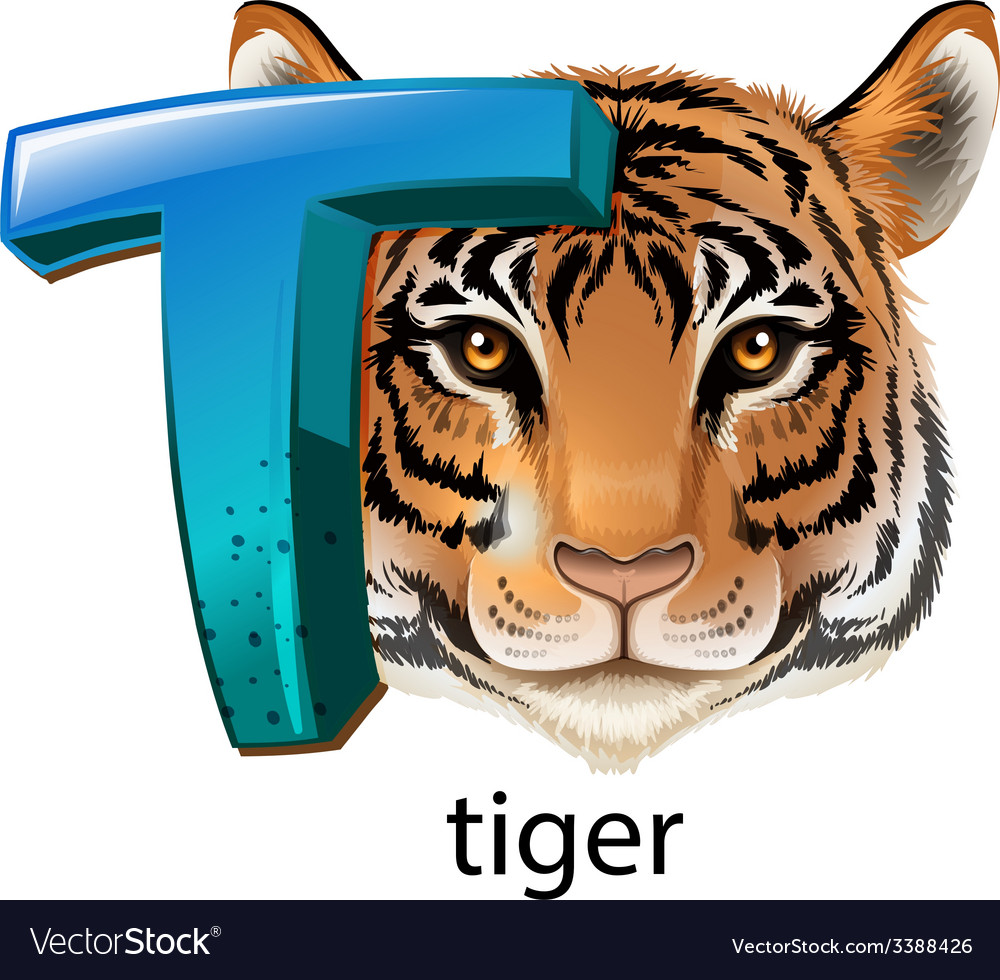 A letter t for tiger vector | Price: 3 Credit (USD $3)