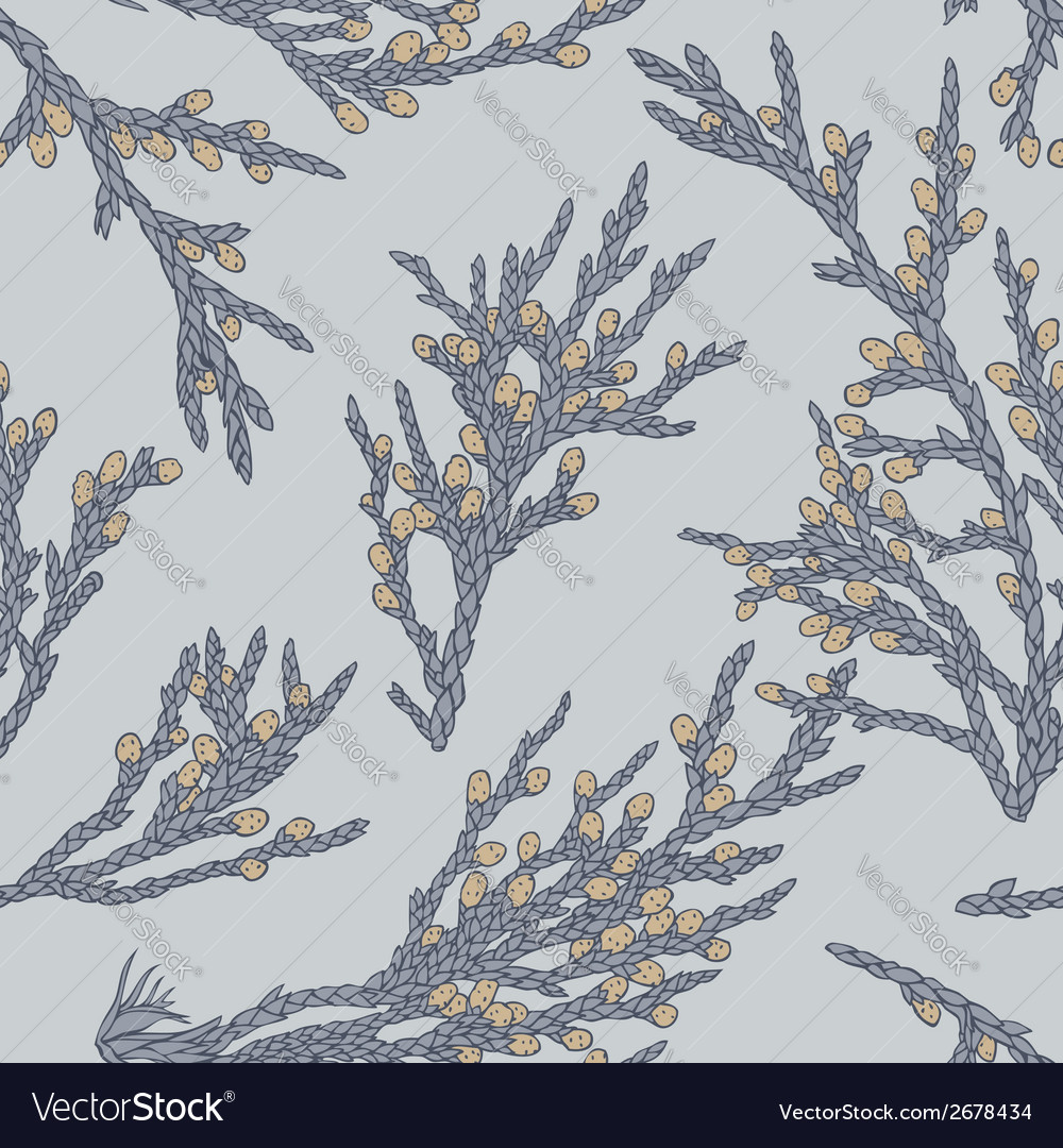 Juniper grey vector | Price: 1 Credit (USD $1)