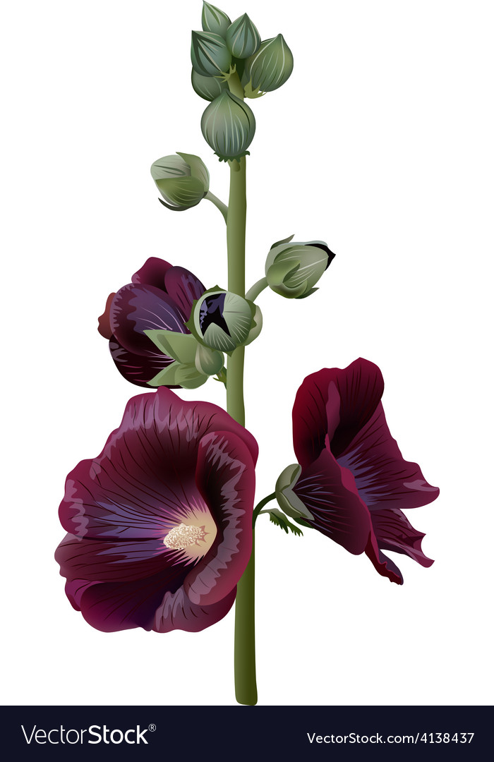 Claret mallow alcea vector | Price: 3 Credit (USD $3)