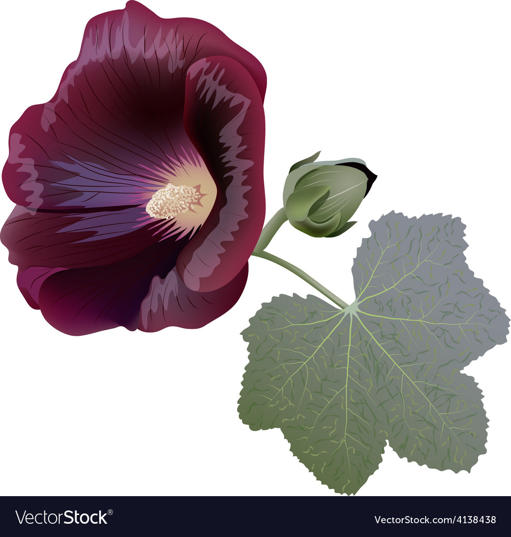 Claret mallow flower alcea bud and leaf vector | Price: 3 Credit (USD $3)