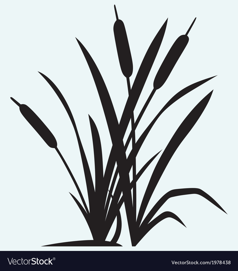 Silhouette reed vector | Price: 1 Credit (USD $1)