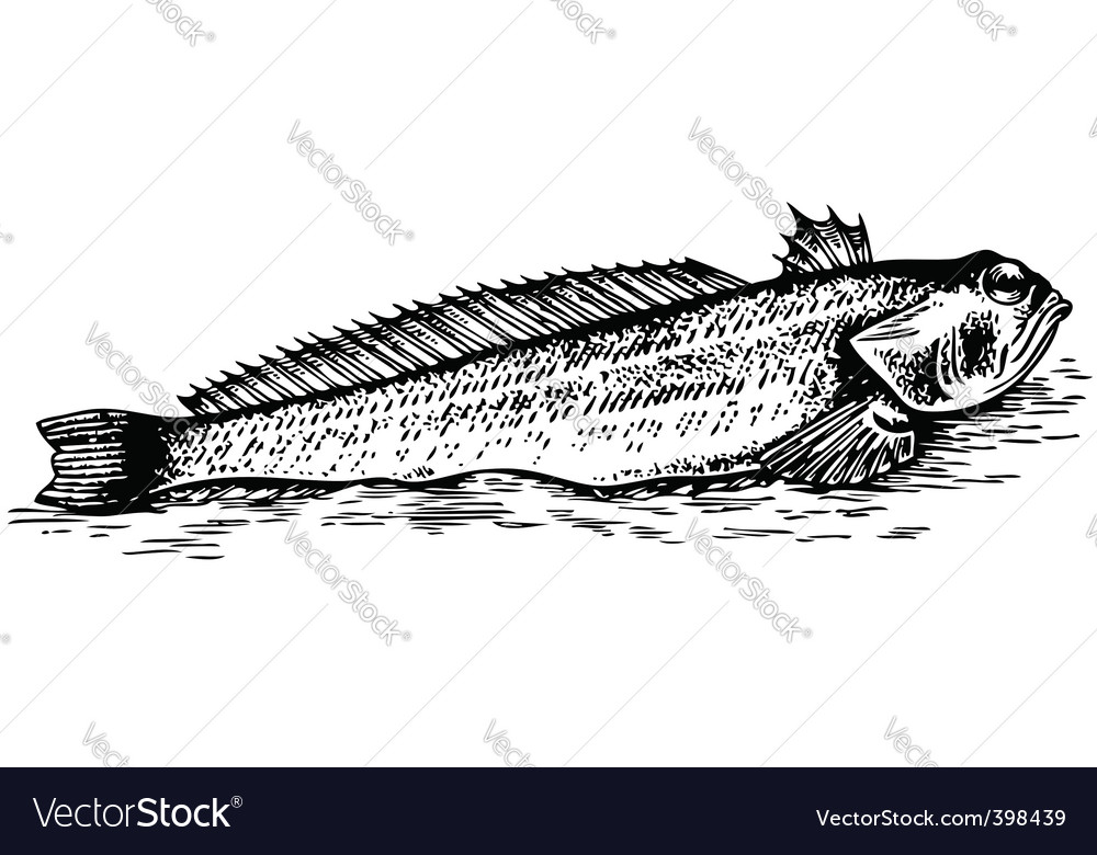 Fish trachinus vector | Price: 1 Credit (USD $1)