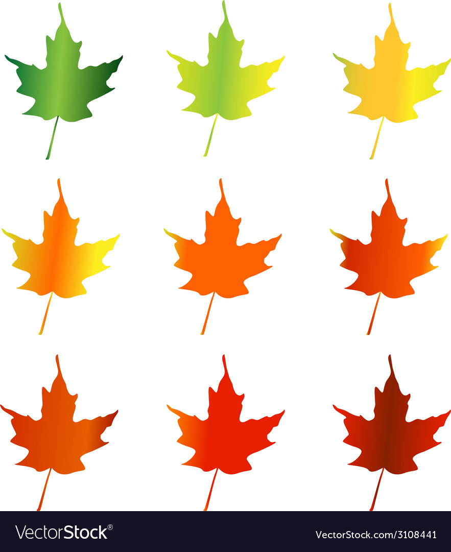 Leaves changing color vector | Price: 1 Credit (USD $1)