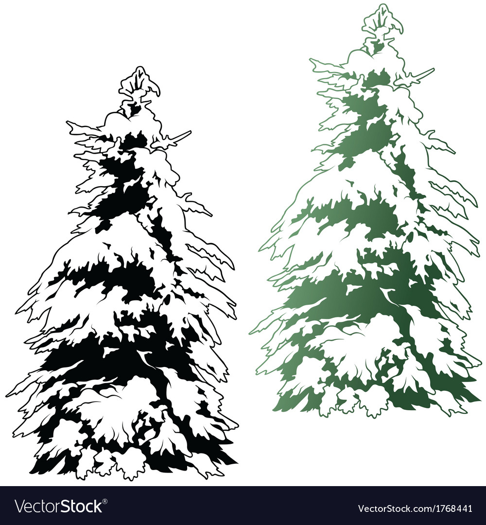 Snowy coniferous tree vector | Price: 1 Credit (USD $1)