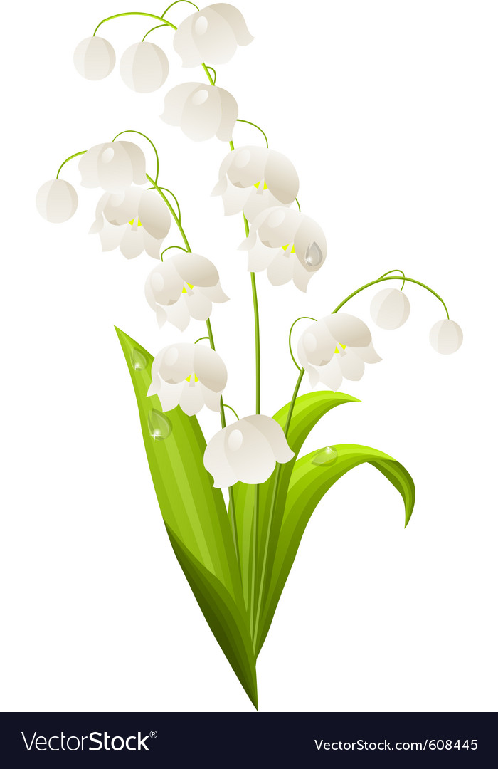 Lily of the valley isolated vector | Price: 1 Credit (USD $1)