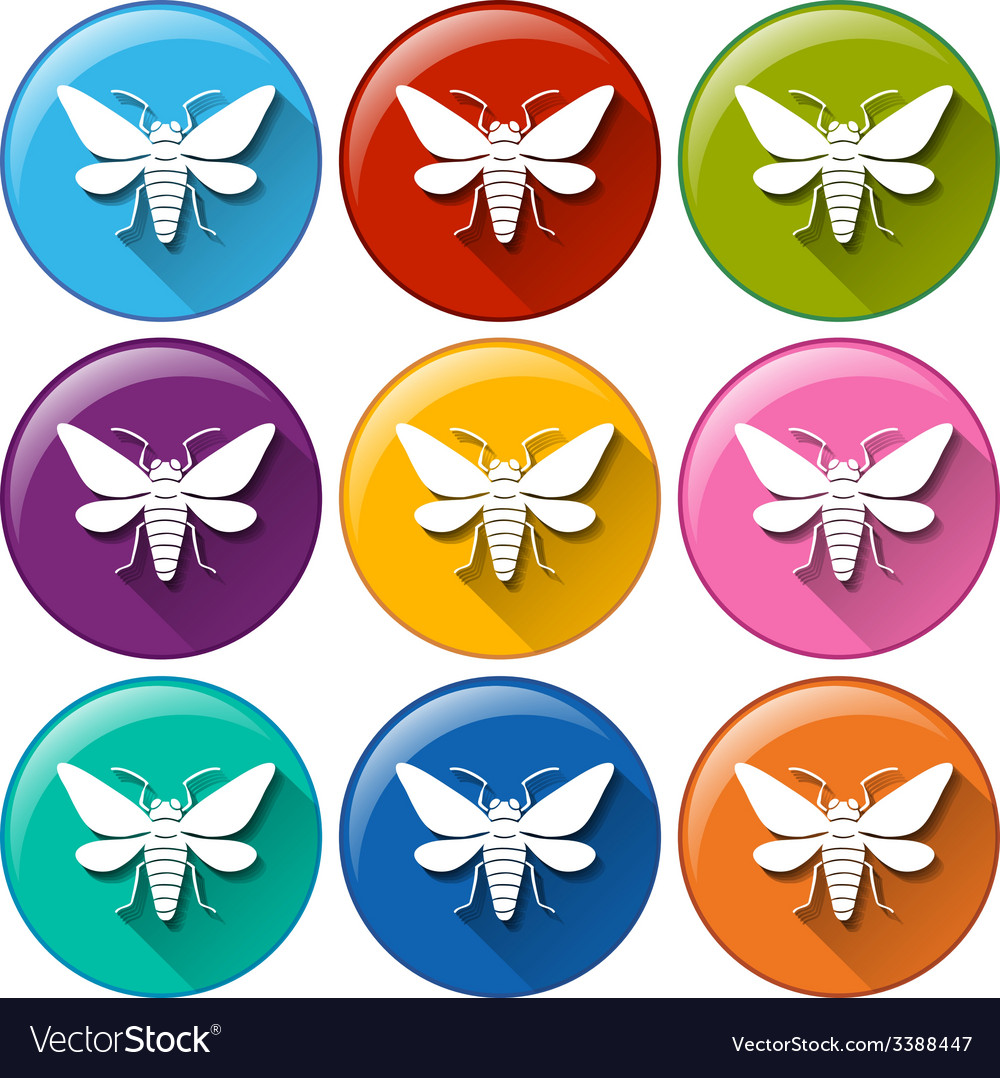 Buttons with insects vector | Price: 1 Credit (USD $1)