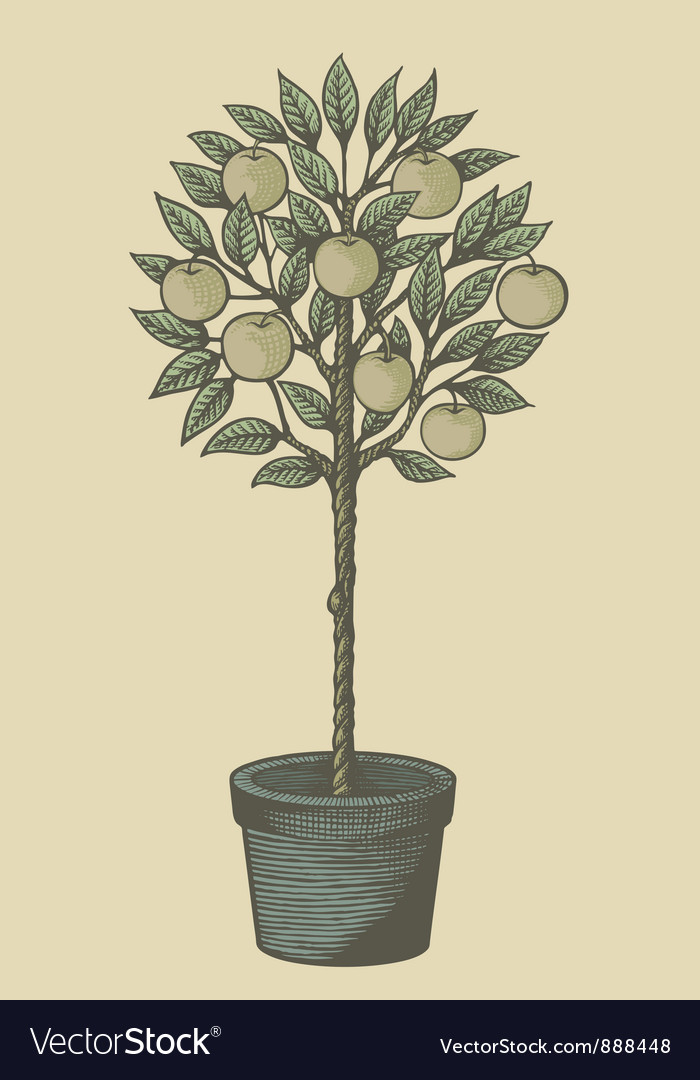 Apple tree woodcut vector | Price: 1 Credit (USD $1)