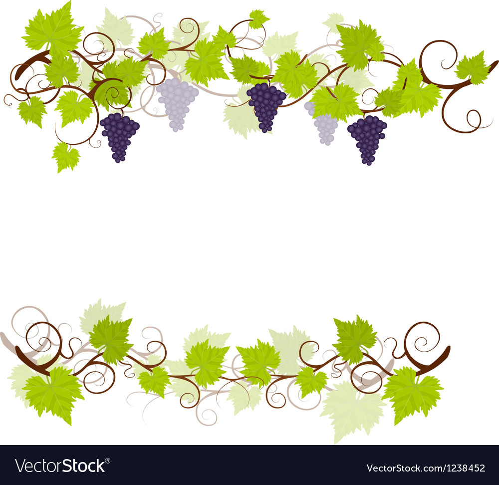 Garden grape vines frame vector | Price: 1 Credit (USD $1)