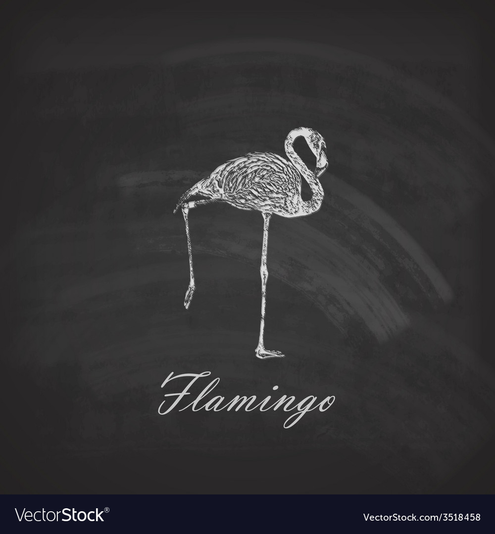 A chalk flamingo on the blackboard texture vector | Price: 1 Credit (USD $1)