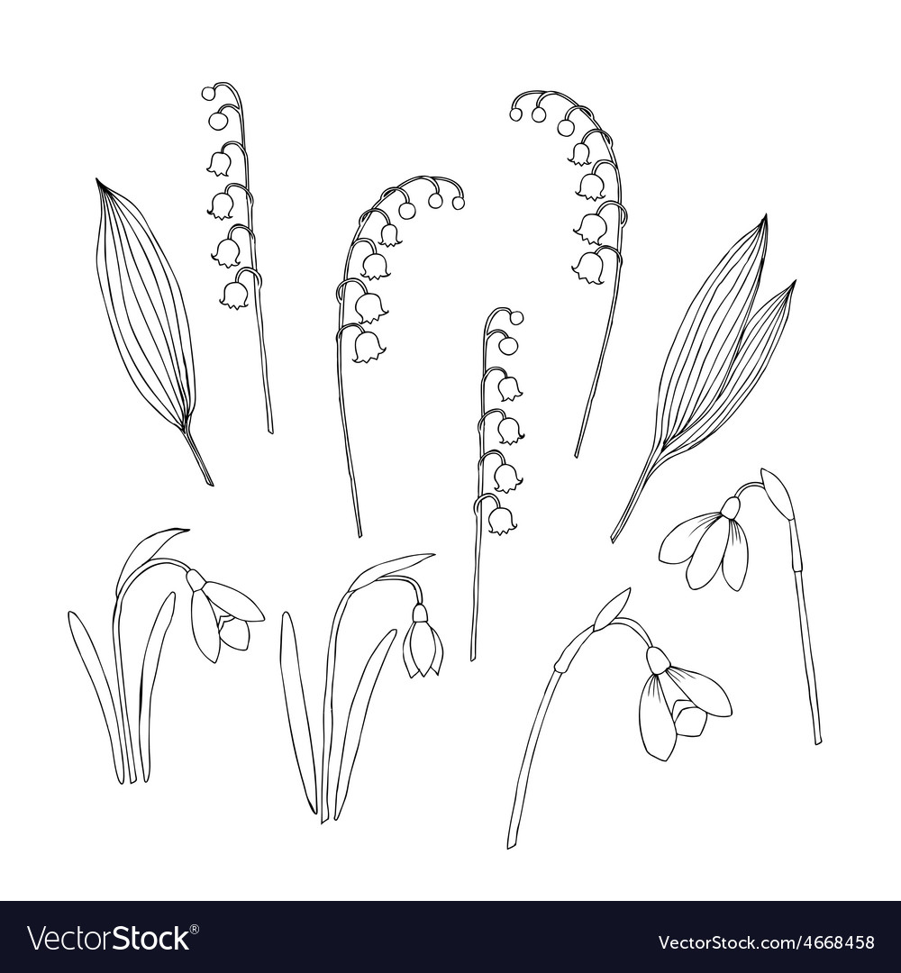 Lilies of the valley and spring flowers vector | Price: 1 Credit (USD $1)