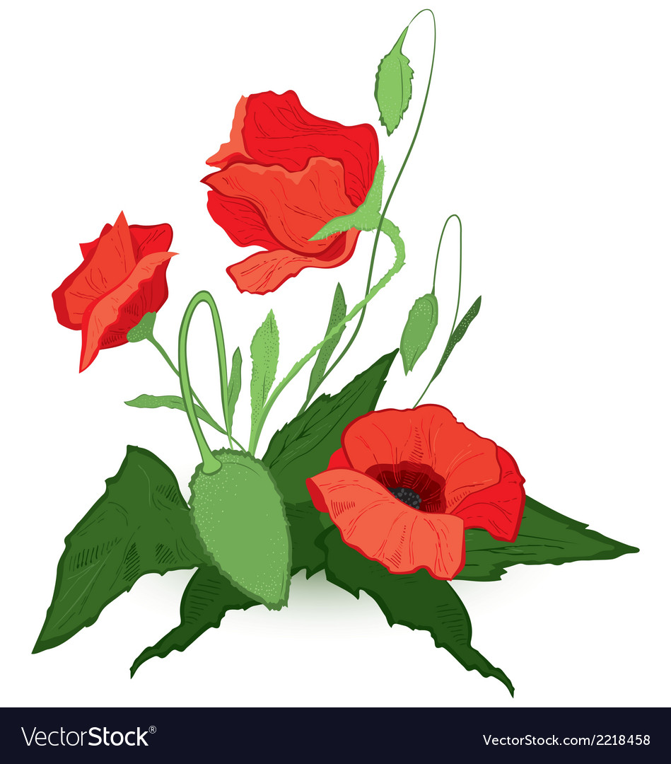 Red poppies vector | Price: 1 Credit (USD $1)
