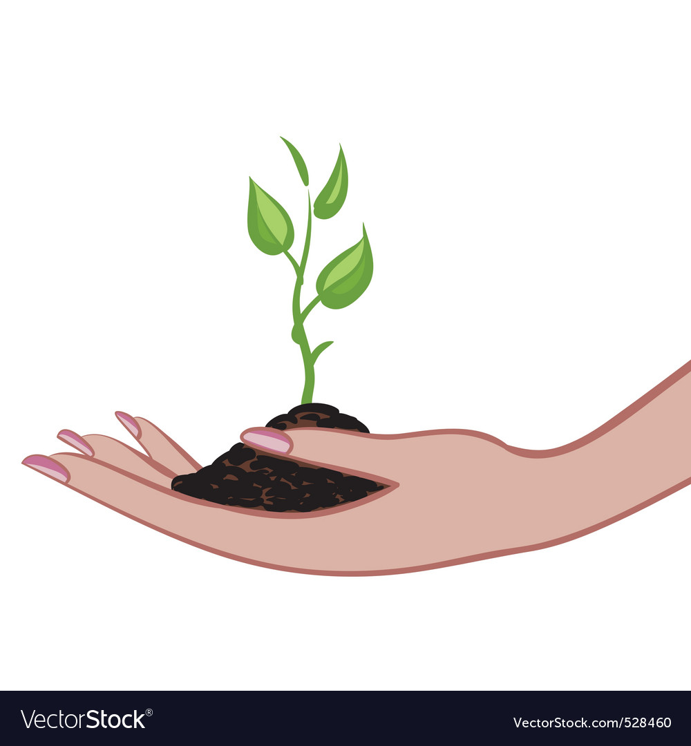 Growing green plant in palm as a symbol of nature vector