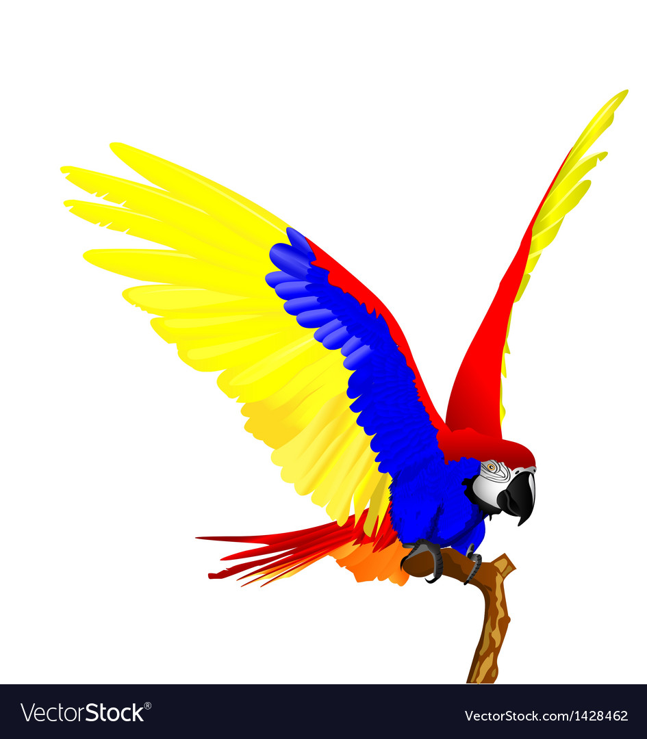 Macaw bird vector | Price: 1 Credit (USD $1)