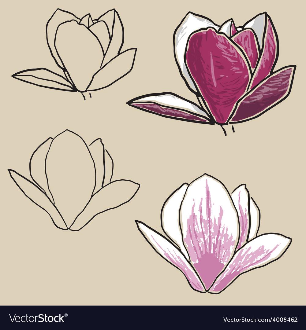 Set of magnolia flowers vector | Price: 1 Credit (USD $1)