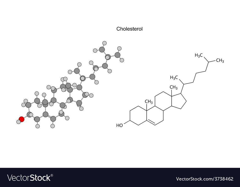 Structural chemical formulas of cholesterol molecu vector | Price: 1 Credit (USD $1)