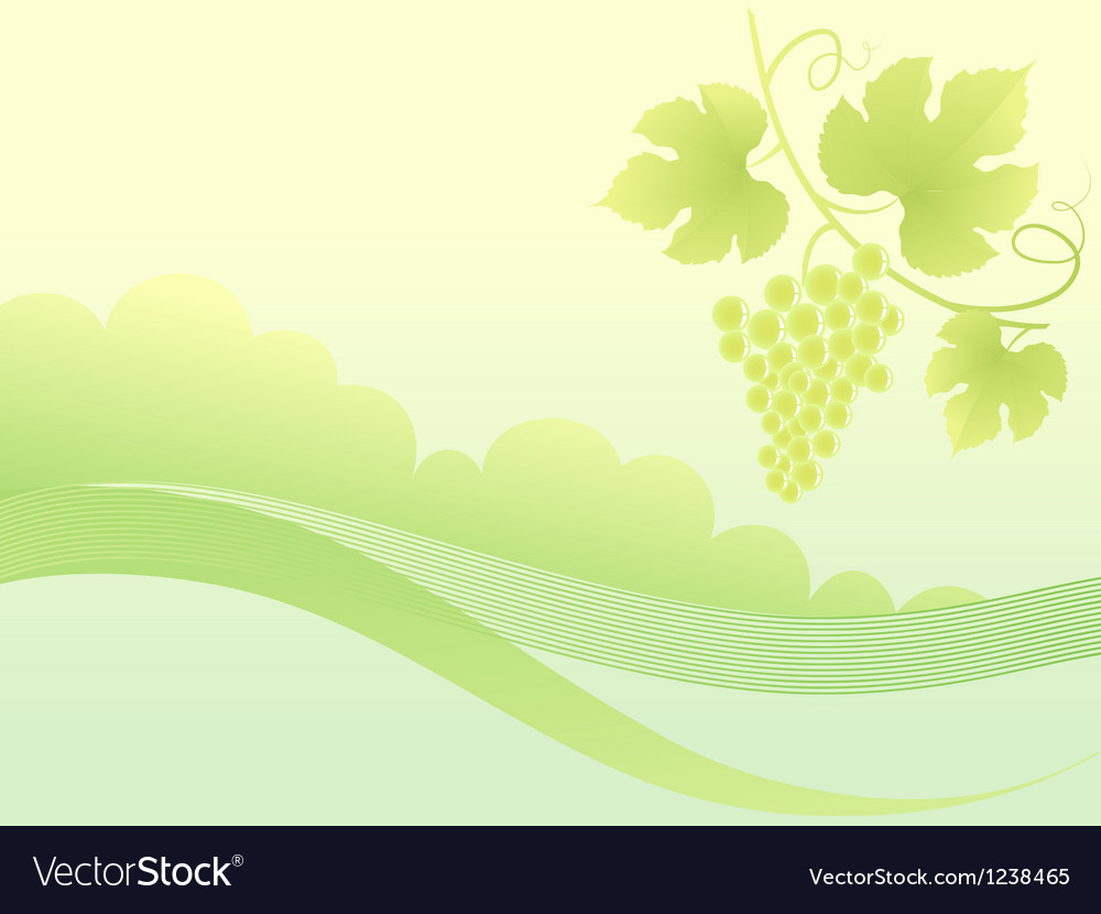 Beautiful green grape vine background vector | Price: 1 Credit (USD $1)