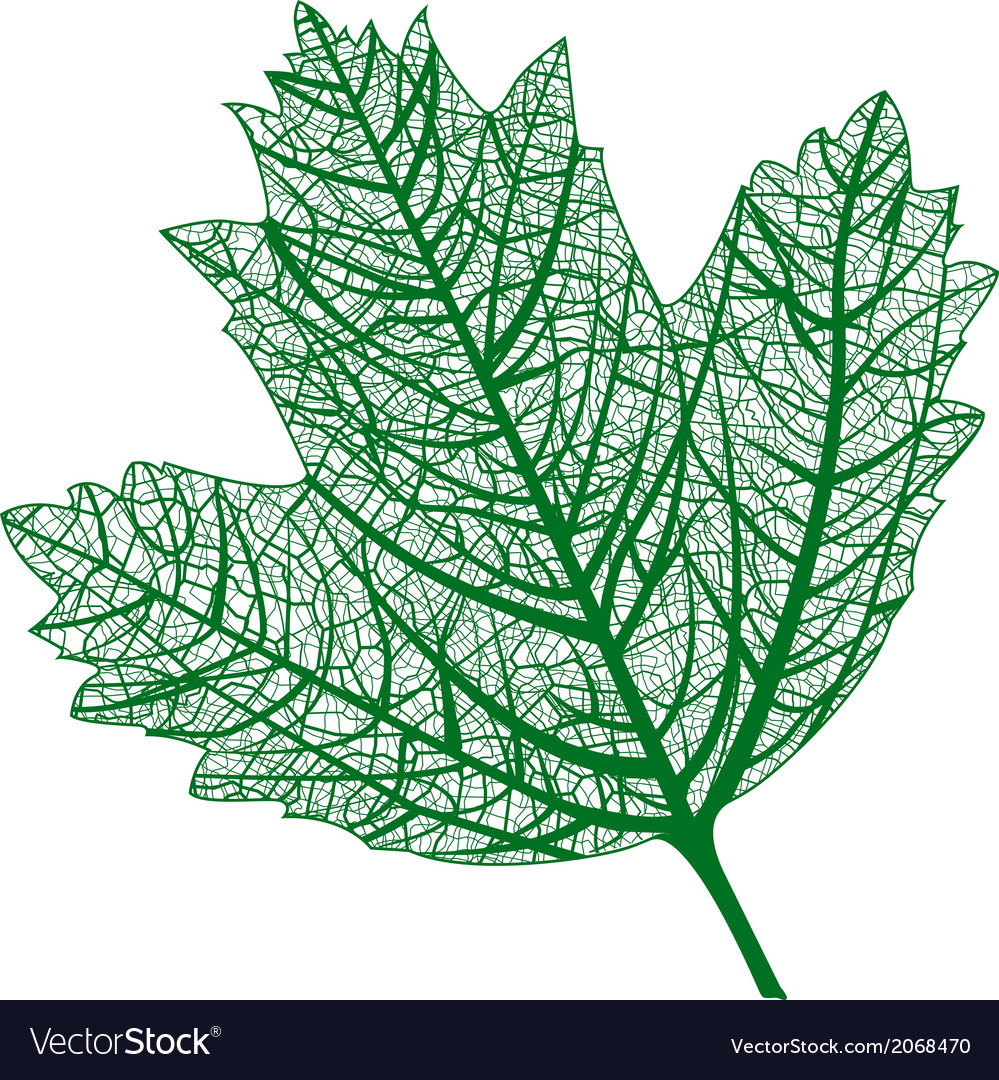 Leaf isolated natural macro leaf vector | Price: 1 Credit (USD $1)