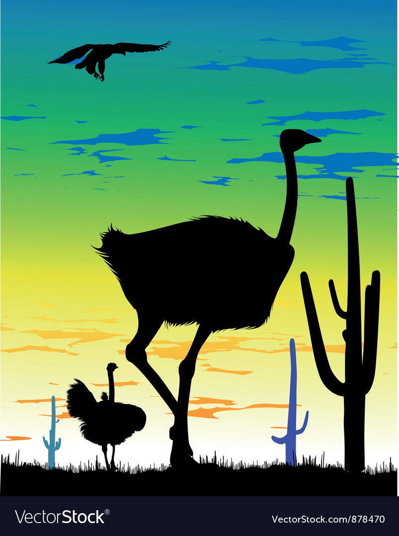 Ostrich in steppes of argentina vector | Price: 1 Credit (USD $1)