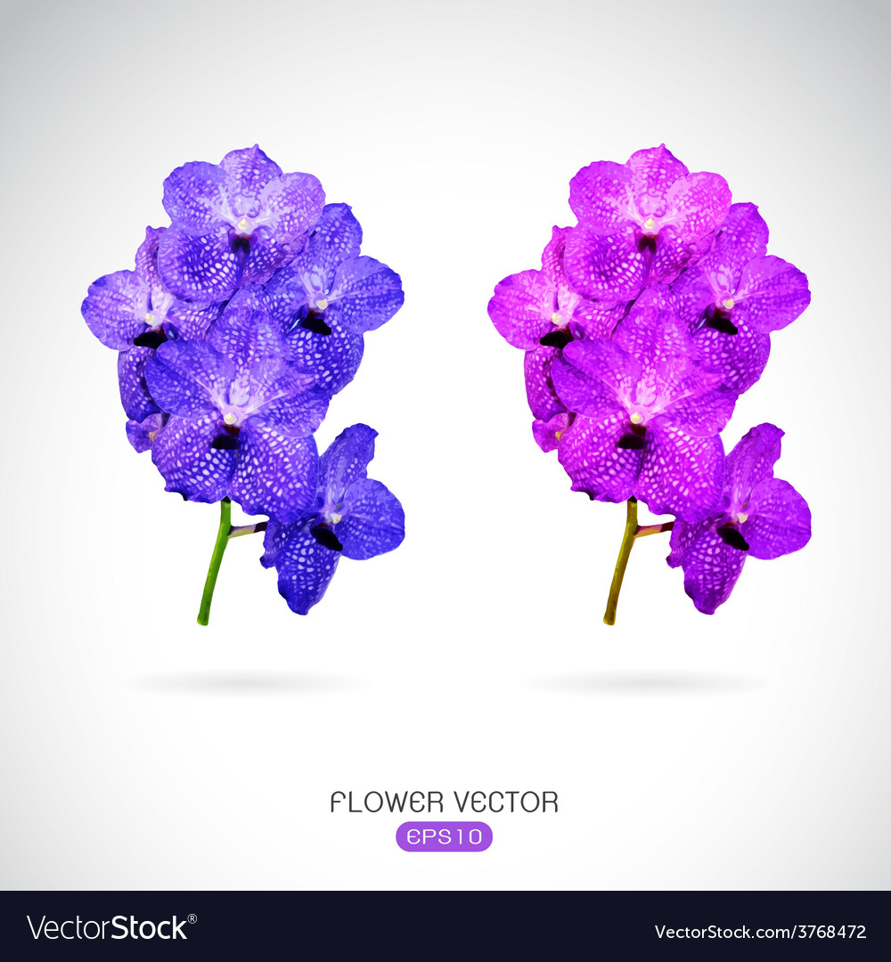 Image of orchid flower vector | Price: 1 Credit (USD $1)