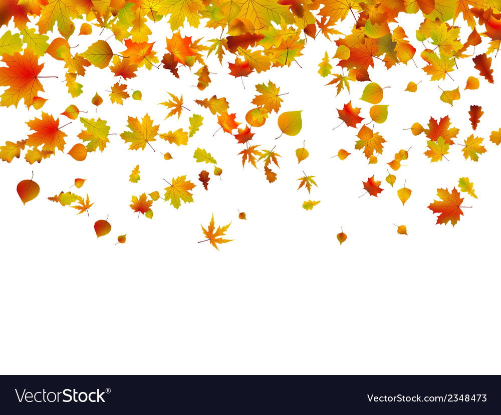 Background of autumn leaves eps 8 vector | Price: 1 Credit (USD $1)