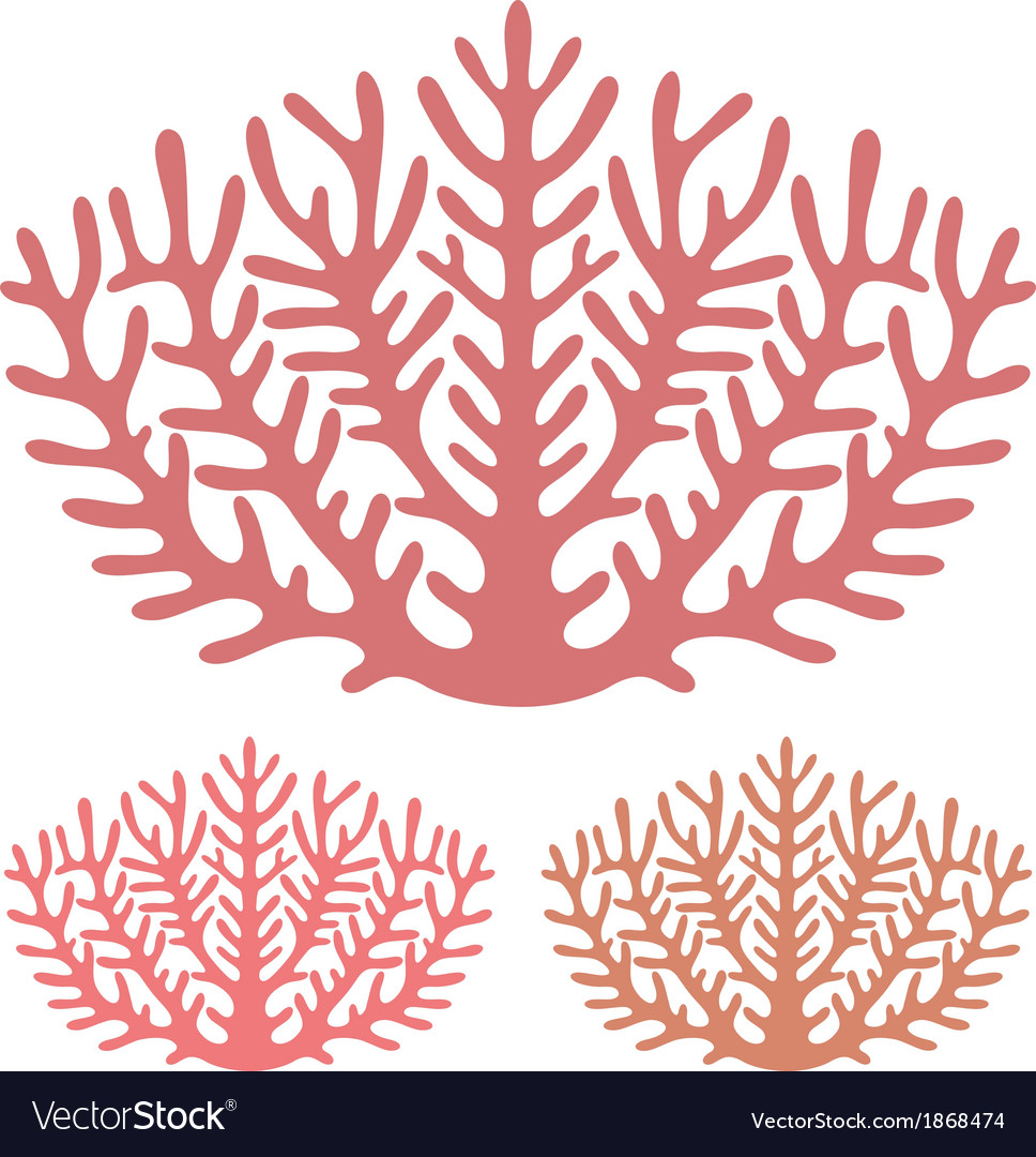 Coral vector | Price: 1 Credit (USD $1)