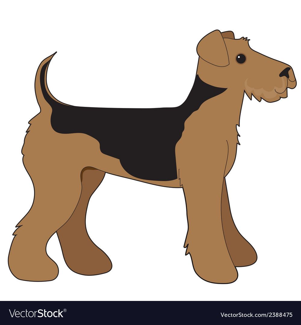 Airedale terrier vector   Price: 1 Credit (USD $1)