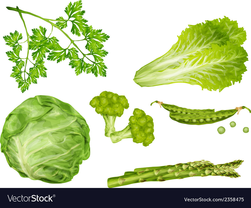 Green vegetables set vector | Price: 1 Credit (USD $1)