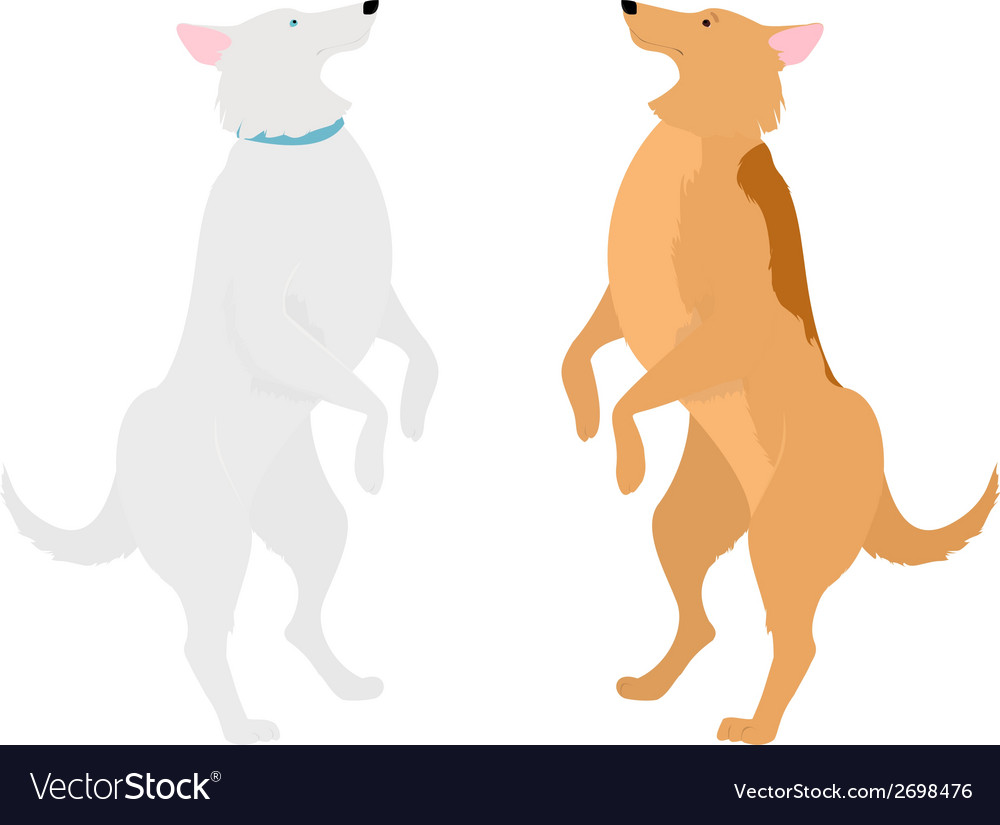 Two dogs standing on hind legs vector   Price: 1 Credit (USD $1)