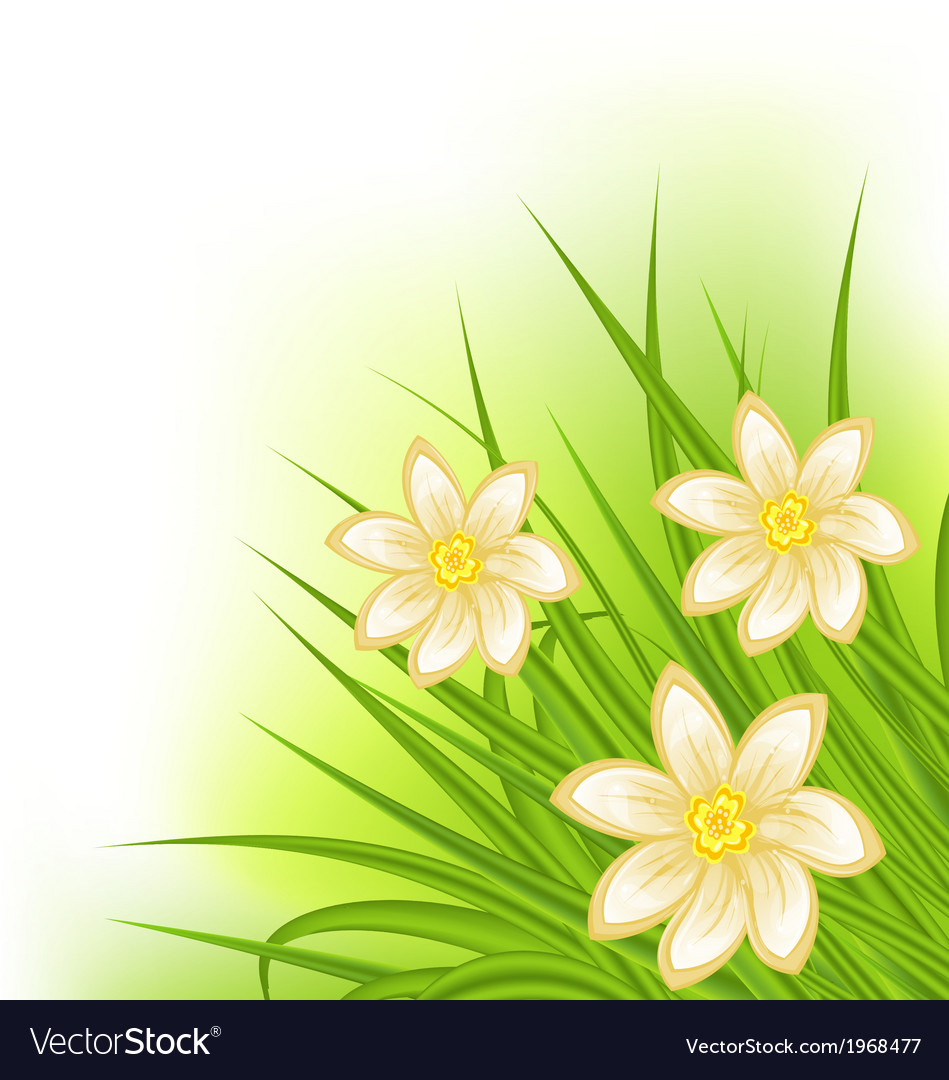 Green grass with flowers spring background vector | Price: 1 Credit (USD $1)