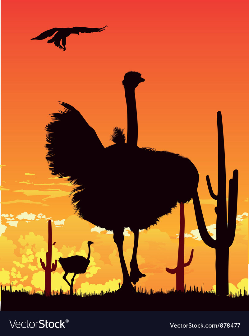 Ostrich wildlife background vector | Price: 1 Credit (USD $1)