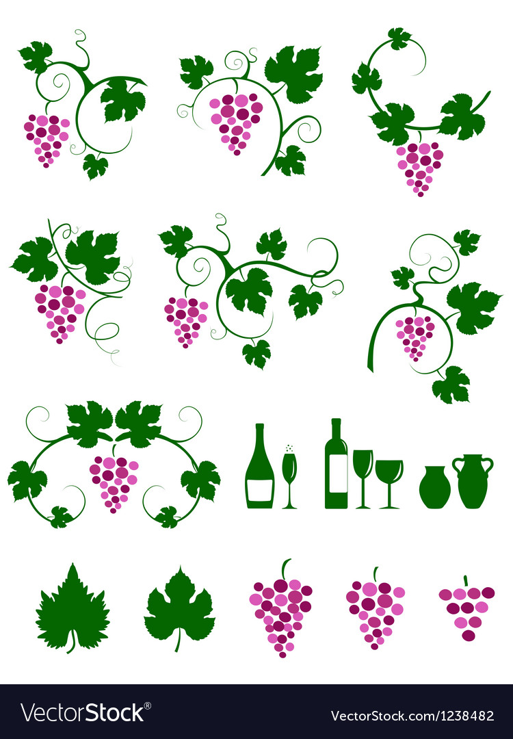 Grape vines design elements set vector | Price: 1 Credit (USD $1)