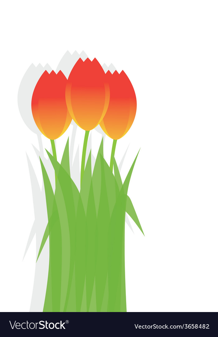 Three bright festive tulips on a white background vector | Price: 1 Credit (USD $1)