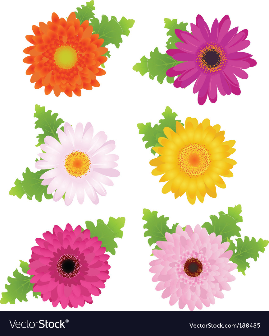 Colorful daisies vector | Price: 1 Credit (USD $1)