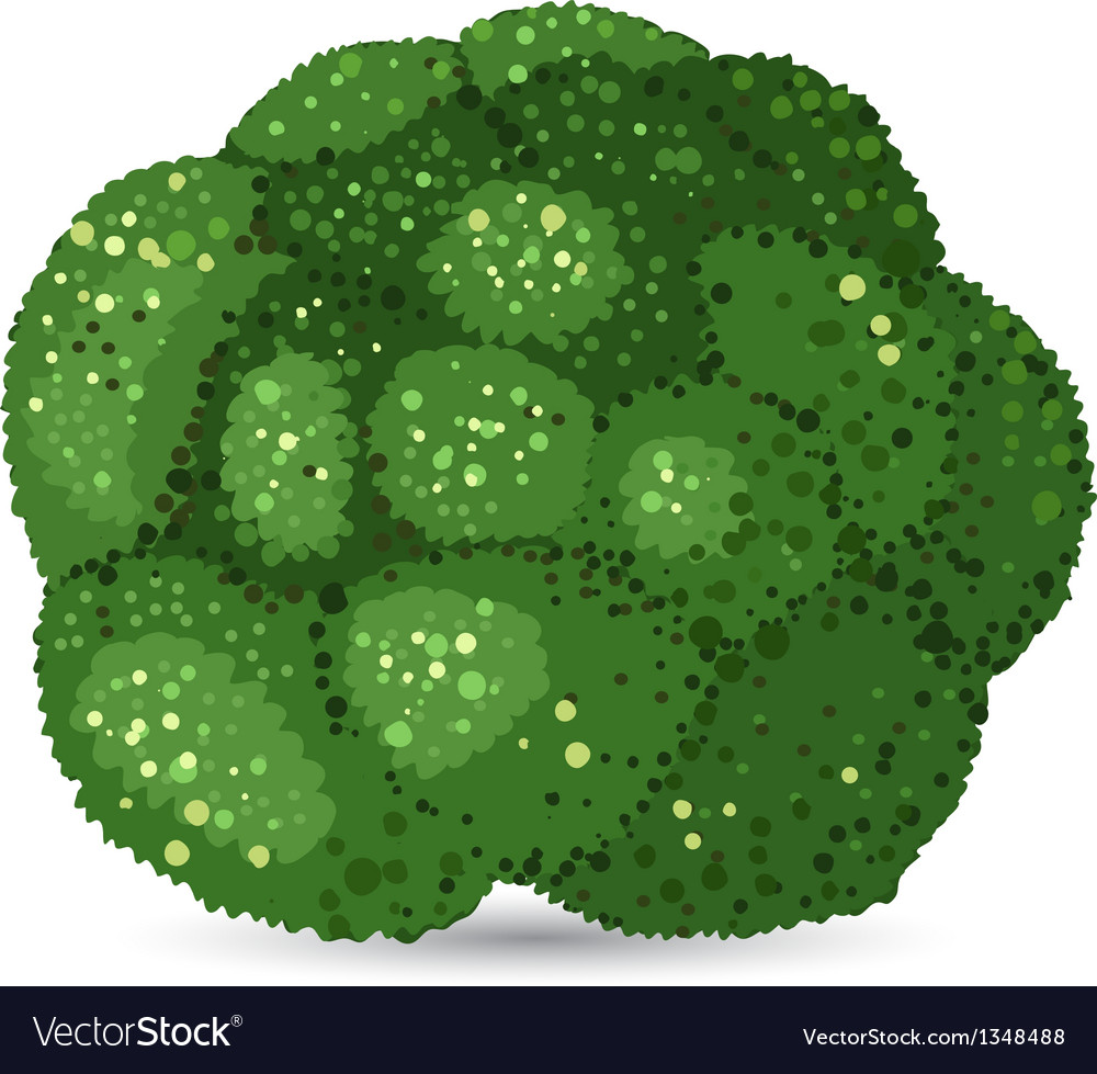 Broccoli vector | Price: 1 Credit (USD $1)