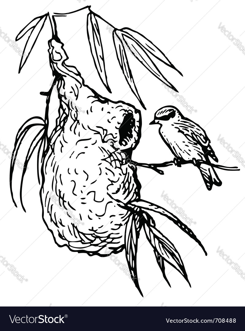 European penduline tit bird vector | Price: 1 Credit (USD $1)