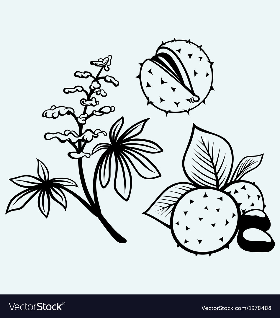 Horse-chestnut flowers leaf and seeds vector | Price: 1 Credit (USD $1)