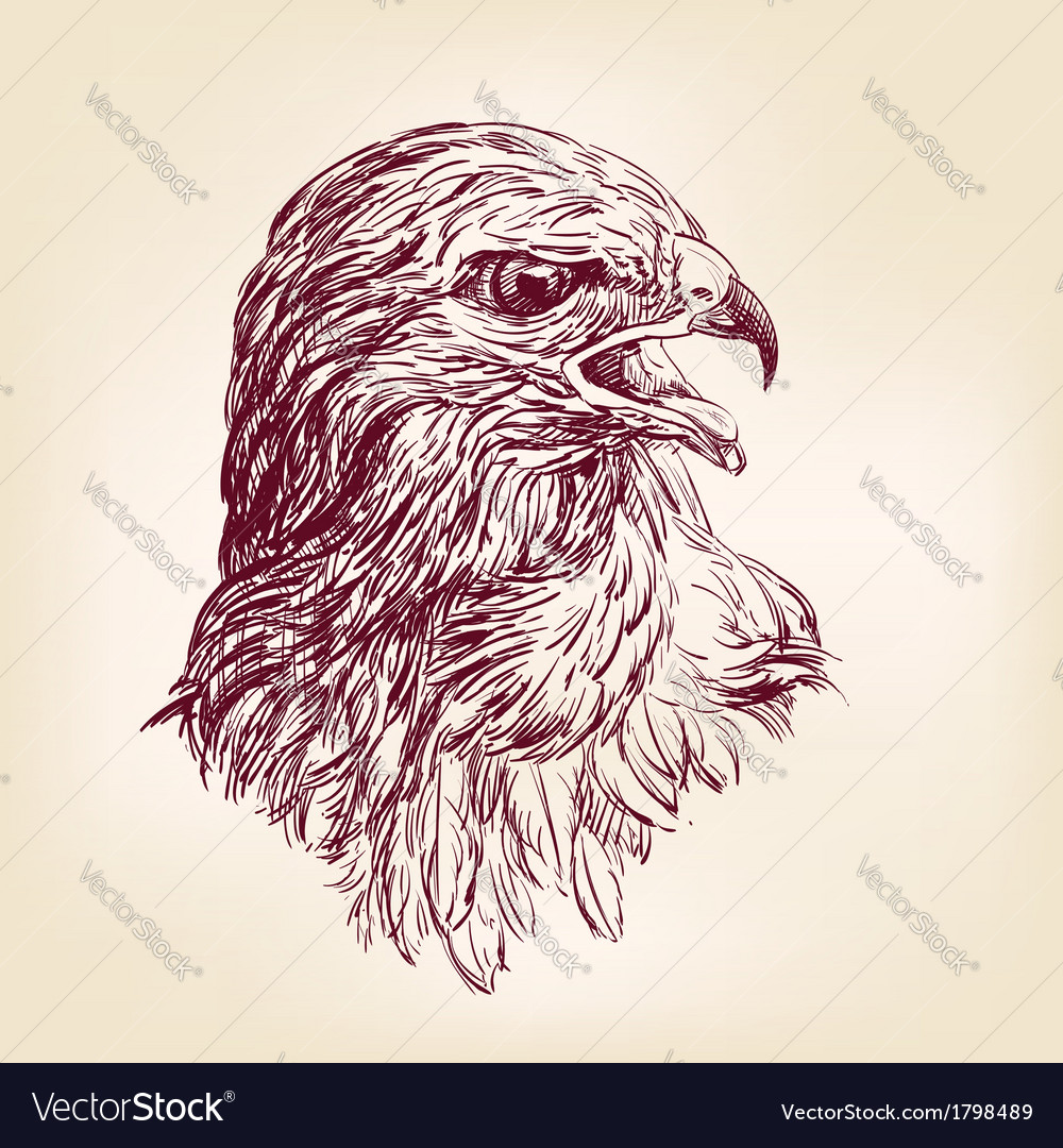 Hawk - vector | Price: 1 Credit (USD $1)